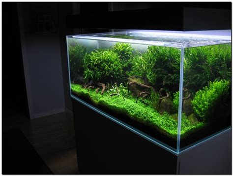 what is aquascaping aquascape basic principles and elements of landscaping under water