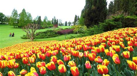 giardino della sigurtà tulipani al giardino sigurt 224
