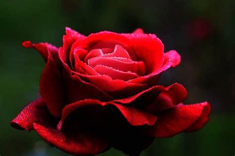 imagenes de flores unicas thank you free pictures on pixabay