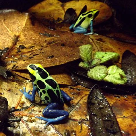 frogs  good pets helping  connect  nature