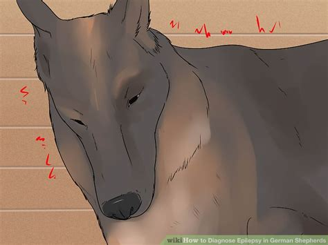 after seizure behavior 3 ways to diagnose epilepsy in german shepherds wikihow