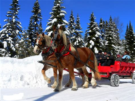 Ride Free sleigh ride free stock photo domain pictures
