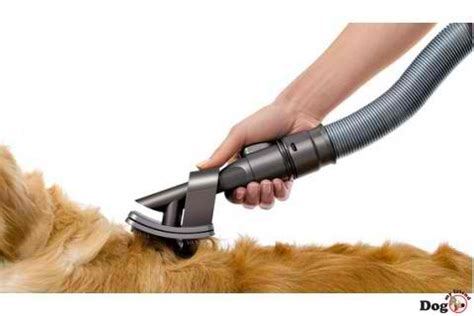 clean dog hair off couch pet hair reducing and prevention suggestions creative