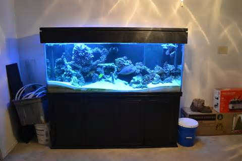 150 Gallon Aquarium   150 Gallon Fish Tank   Fintastic