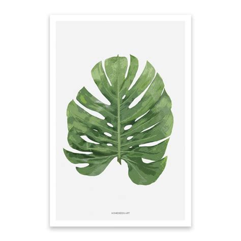 Poster Monstera poster monstera blad botanische posters homeseeds nl