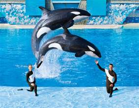 Sea World Seaworld Acknowledges Planting Worker In Animal Rights