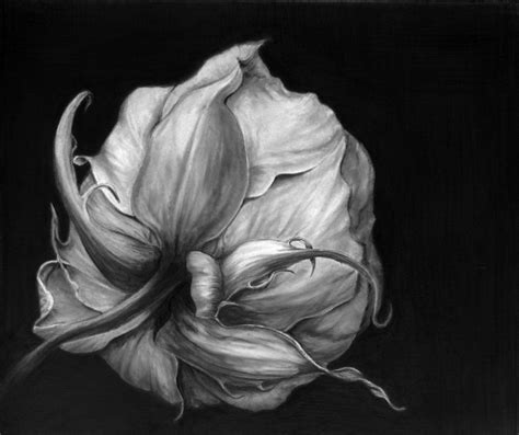 botanical drawing using graphite drawings in shades of gray graphite drawings by maria ruhl