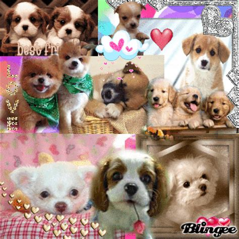 a bunch of puppies puppies picture 108686509 blingee