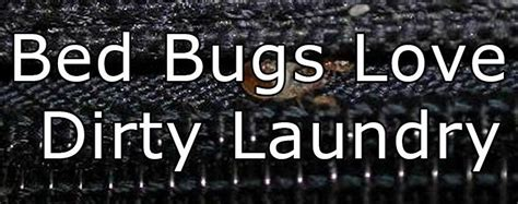 can you get bed bugs from laundromat bed bugs travel in dirty laundry get debedbugged