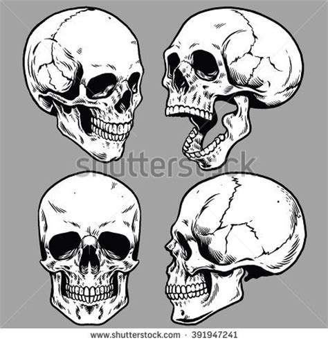 skull stock images royalty free images amp vectors