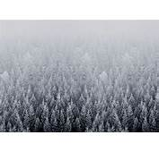 IOS 8 Snow Forest Default Mac Desktop Wallpaper