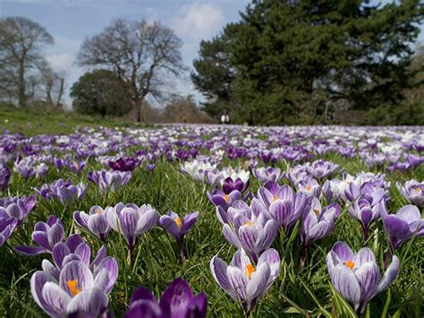 where to see spring flowers in london lastminute com blog