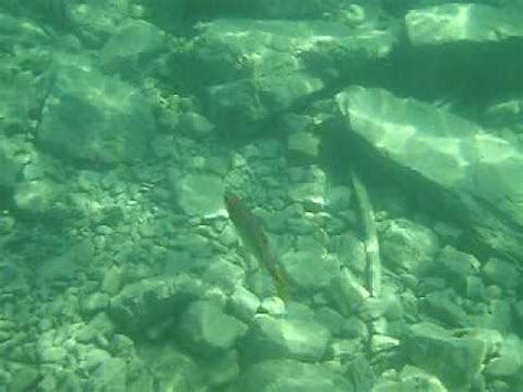 following fish in flathead lake by tim austin youtube