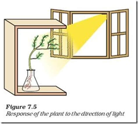 tropic movements in plants and co ordination in plants