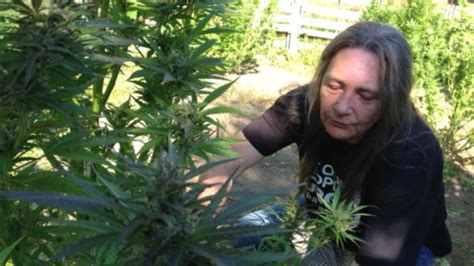 marijuana no longer a 4 marijuana licences no longer a home grown option politics cbc news