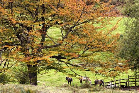 imagenes de paisajes europeos art 237 culo convenio europeo del paisaje portal de medio