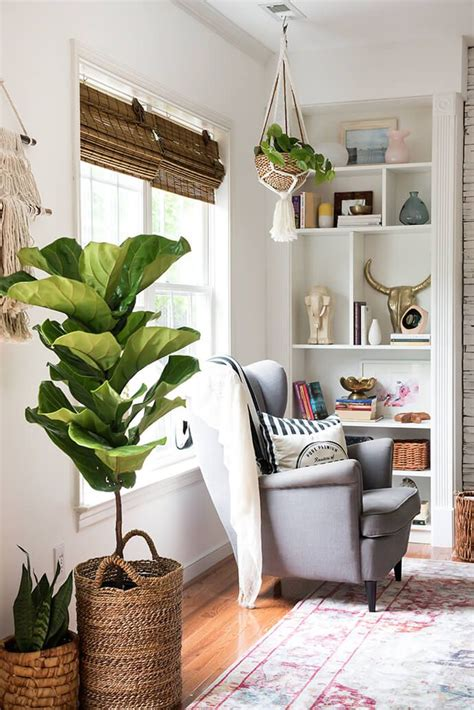 Decorative Plants For Living Room by 25 Best Ideas About Living Room Plants On