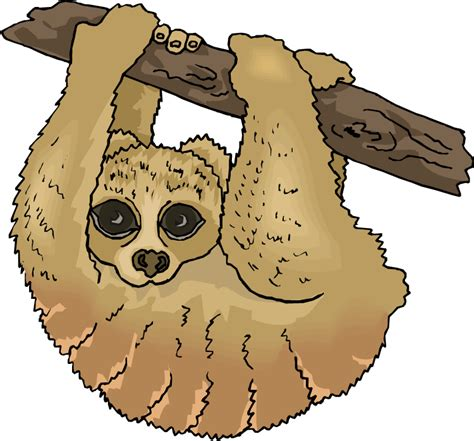 sloth clipart free sloth clipart