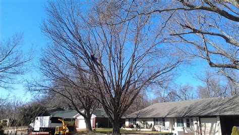 service oklahoma tree trimming service in choctaw ok arborscapes tree service tree service