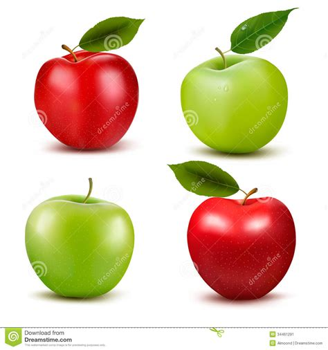 set apple green set of and green apple fruits with cut and gre stock