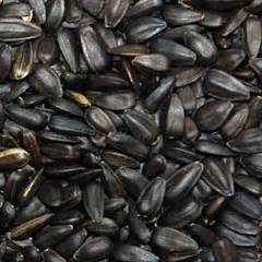 black sunflower seed canada bird food