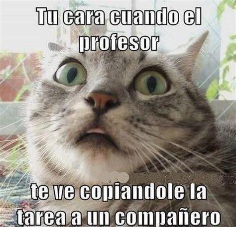 imagenes atrevidas graciosas para descargar fotos de gatos con chistes para facebook imagenes de