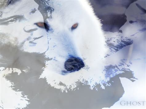 wallpaper ghost game of thrones ghost wolf game of thrones wallpaper by darkelektra on