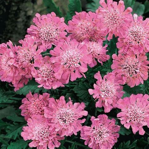 fall flowering perennials 29 best ideas about perennial flowers full to part sun