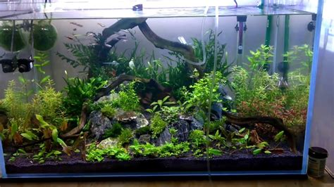 Aquarium 80 Cm By Arlicho nature aquarium 80cm