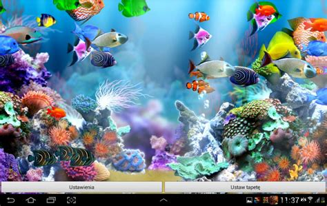 aquarium live wallpaper hd for android youtube real aquarium wallpaper amazing wallpapers