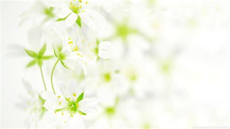 wallpaper flower white flower white leaves wallpaper 2560x1600 22940