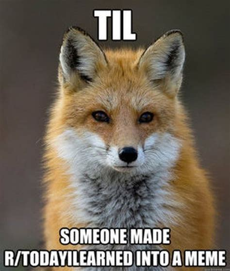 Fox Meme - fun fact fox meme fun