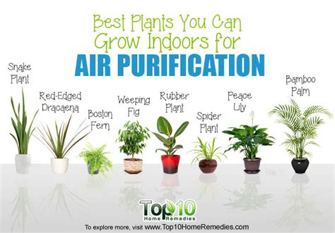 best 10 air purifying plants with nasa ratings blog nasa study 10 best plants you can grow indoors for air