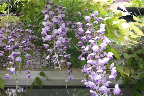g4mhj gardening