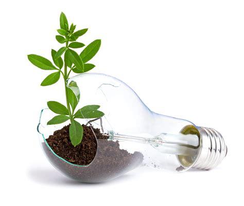 plant grow light bulb barry hurd entrepreneur tips from humpty dumpty