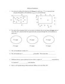 diffusion student worksheet