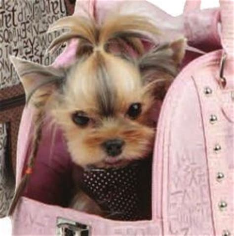 dog haircuts austin 138 best images about puppy love on pinterest pets