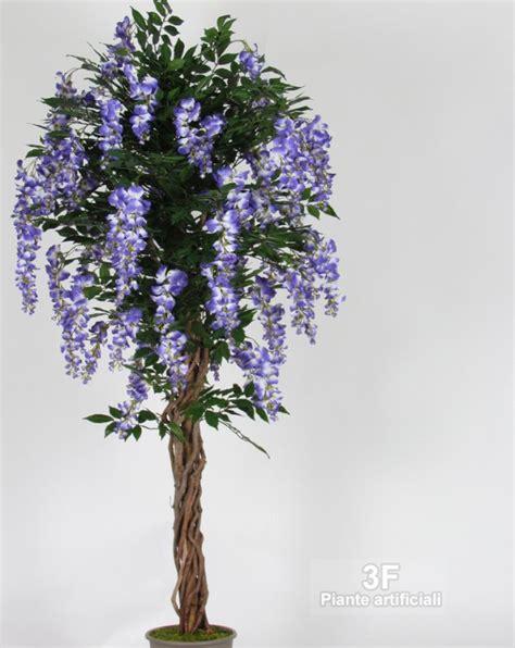 glicine in vaso prezzo glicine liana altezza cm 150 216 vaso cm 22 3f piante