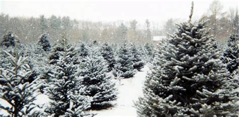 christmas tree permits in el dorado ca pest proofing your home for the holidays environmental pest