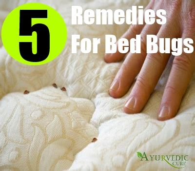cure for bed bugs 5 bed bugs home remedies natural treatments cure