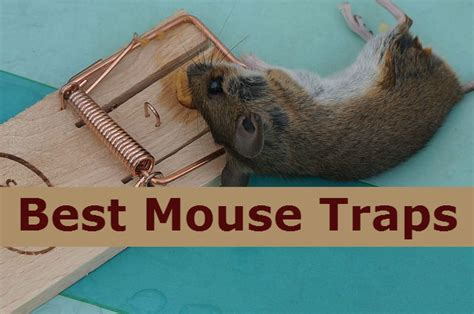16 best mouse traps that works for home kitchen and garage