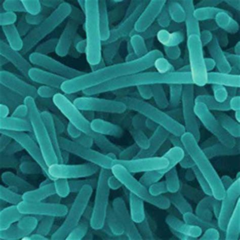 foodsafety.asn.au » listeria monocytogenes
