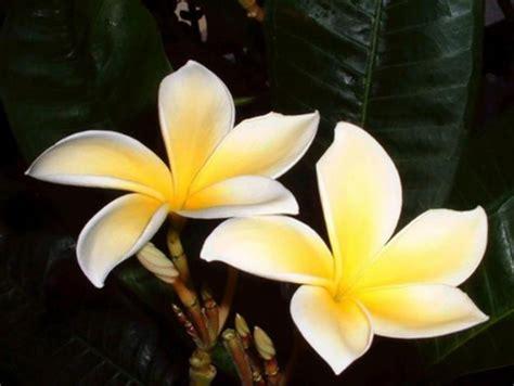 foto ci di fiori tarocchi e fiori di bach ricerche naturopatiche