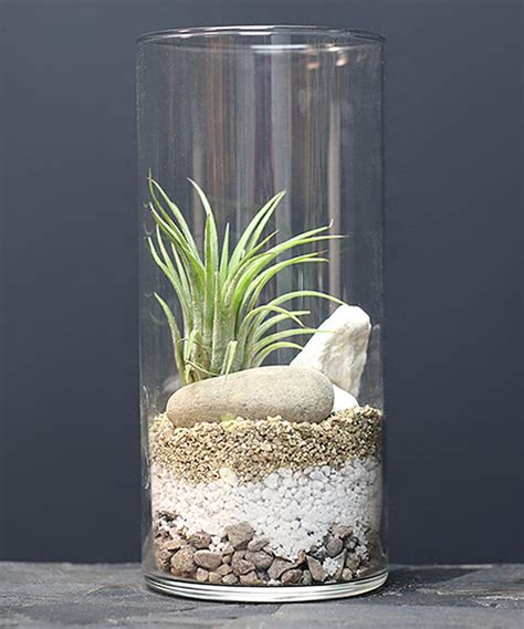 air vase 25 best ideas about air plant terrarium on