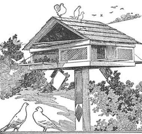 pigeon house design pigeon house plan woodworking crafts construction pinterest house plans
