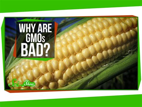are gmos bad for your health if you re asking this question you re probably missing the point why are gmos bad