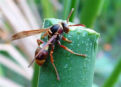 how to keep wasps away from house how to keep wasps away from your home livebetterbydesign
