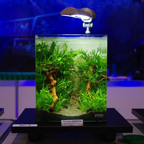 konkurs akvariumnogo dizayna dennerle nano cube