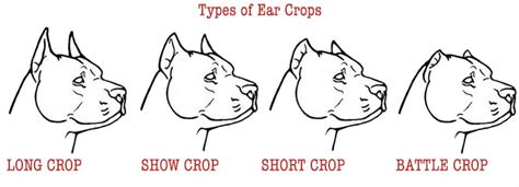 Types Of Crop Cuts | diagram of ear cropping images how to guide and refrence