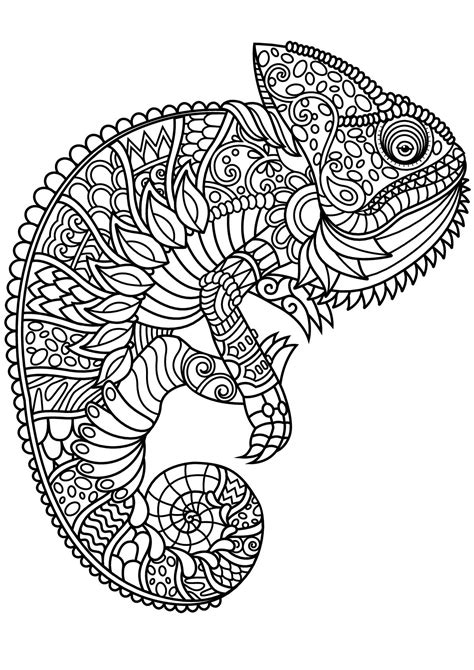 chameleon  complex  beautiful patterns